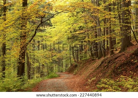 Trail through the picturesque autumnal forest. - stock photo