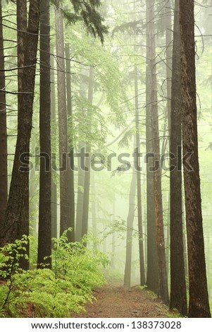 Trail through the spring forest on the edge of coniferous and deciduous trees.