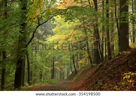 Trail through the woods in early autumn. Poland. - stock photo