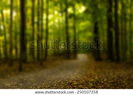 Trail View in Colorful Autumn Forest with a Blurry Filter Effect  - stock photo
