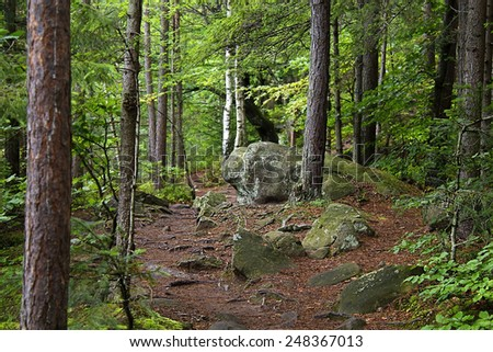 trail winding among the rocks in the forest