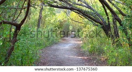 Trail winds through dense vegetation at Everglades National Park of Florida - stock photo