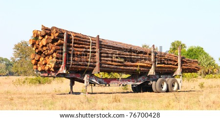 Trailer full of pine logs from a logging operation in Florida