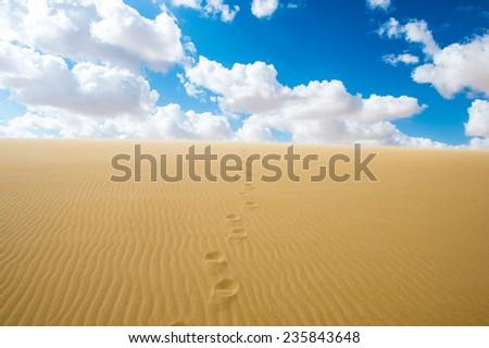 Trails on the sand dune in the Sahara desert in Egypt - stock photo