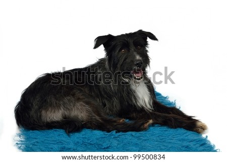 Trained dog on her place isolated - stock photo