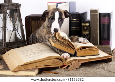 trained dogs with books
