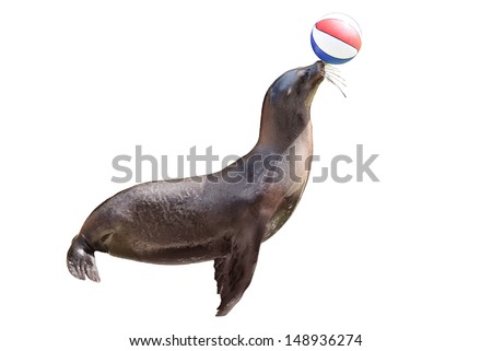 trained fur seal playing with ball on  stage - stock photo