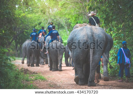 Trainer and his elephant walking on the road go to Elephant forest Camp, Thailand  - stock photo
