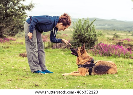 trainer tell dog to sit, german shepherd security dog