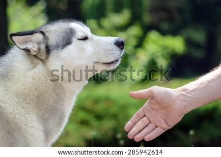 Training dog - stock photo