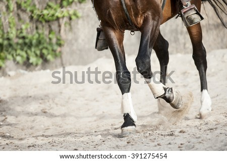 training horse detail - stock photo