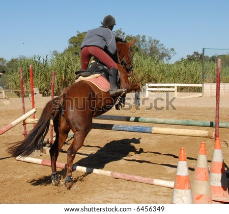 training of competiyion in jumping for a woman and her brown horse