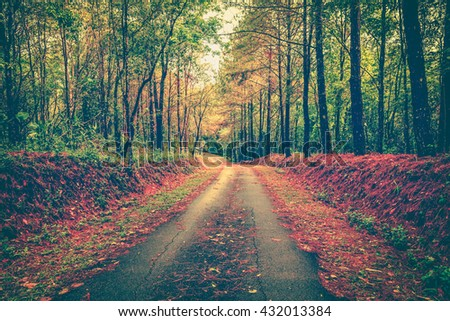 Tranquil autumn forest scenery with vibrant colors and a footpath through a beautiful woods. Idyllic rural view of pretty surroundings. Vintage picture style. - stock photo