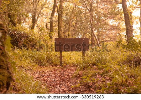 Tranquil autumn scene in forest with copy space sign