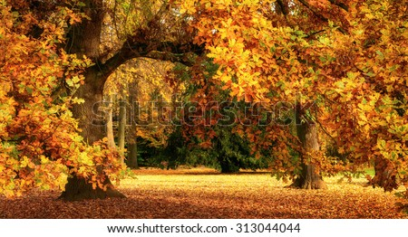 Tranquil autumn scenery showing a magnificent oak tree with colorful leaves in a park, with soft light, wide format - stock photo