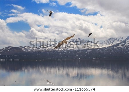 Tranquil lake surrounded by volcanoes  gulls hover in the sky,