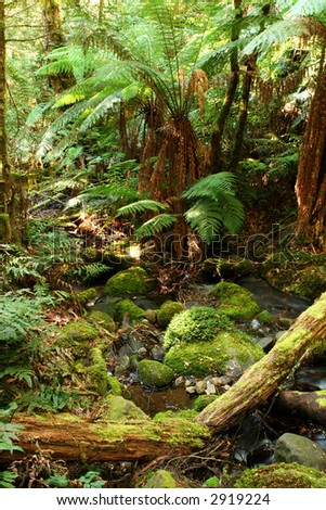 Tranquil rainforest respite, with softly-flowing creek, moss-covered boulders and logs, and tree ferns.  Victoria, Australia. - stock photo