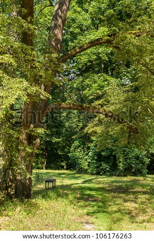 tranquil scene with bench in the park