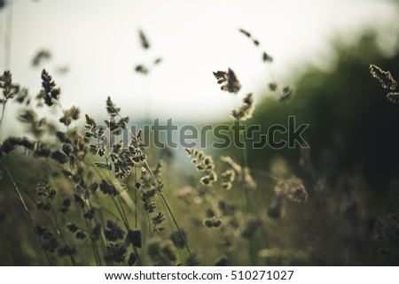 Tranquil scene with close up of Grass on the meadow in early summer