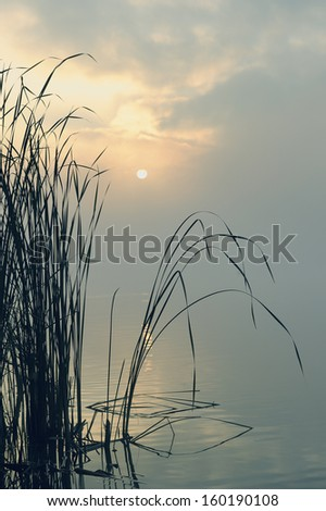 Tranquil scene with reed at lake in early morning mist - stock photo