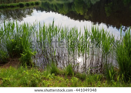 tranquil scenery - green reed at the moor lake shore, reflection in the water - stock photo