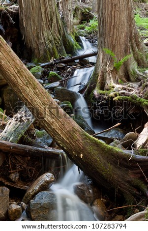 Tranquil stream in a quiet cedar tree forest in northern Idaho - stock photo