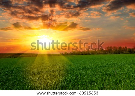 Tranquil sunset over green field - stock photo