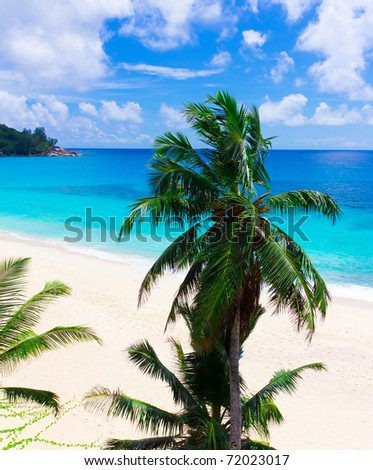 Tranquility Palms Shore - stock photo