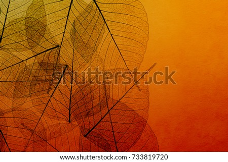 transparent leaves on color background natural design
