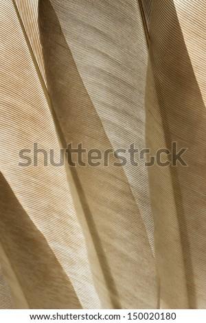 Transparent pigeon feathers close up - stock photo
