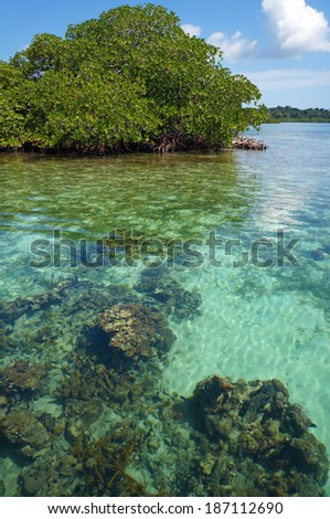 Transparent waters of the Caribbean sea with corals under water surface and an islet of mangrove tree in background, Bocas del Toro, Panama, Central America