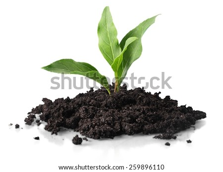 Transplant of a tree - stock photo