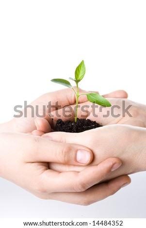 Transplant of a tree in female and children's hands on a white background. Concept for environment conservation. - stock photo