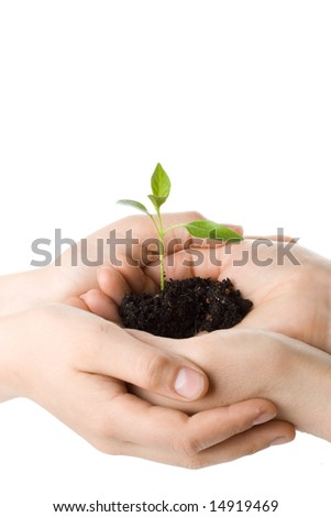 Transplant of a tree in female and children's hands on a white background. Concept for environment conservation.