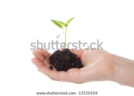 Transplant of a tree in female hands on a white background. Concept for environment conservation.