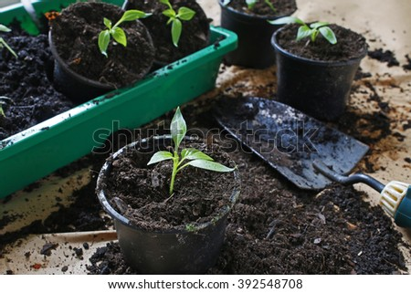 transplantation of young plants