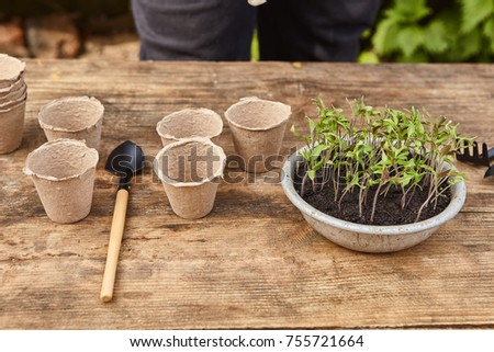 transplantation of  young small green plants on the ground close up garden concept