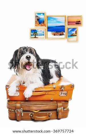 Travel concept: cute dog posing with vintage suitcases and photos of exotic places in the background (all individual photos can be found in my portfolio) - stock photo