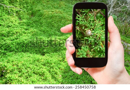 travel concept - tourist taking photo of snail on green algae on beach at low tide on mobile gadget, Malta - stock photo
