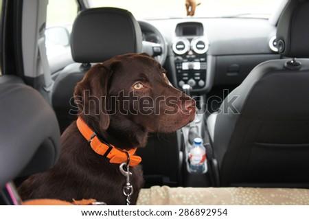 Traveler dog - stock photo