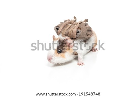 Traveling Hamster. Funny hamster travel with backpack - stock photo