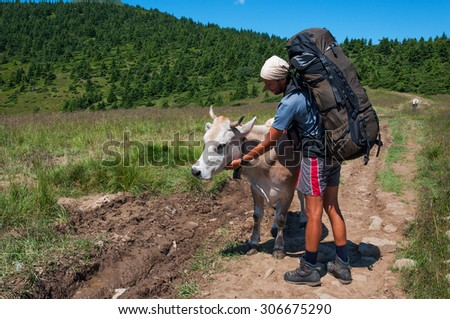 Travelling with a large backpack and a white cow