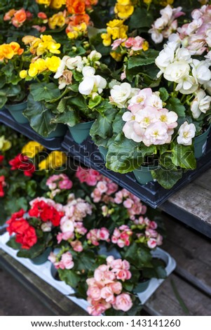 Trays of flowers for sale in plant nursery store - stock photo