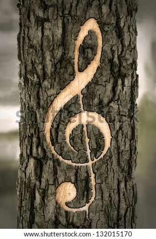 treble clef carved into the bark of a tree - stock photo