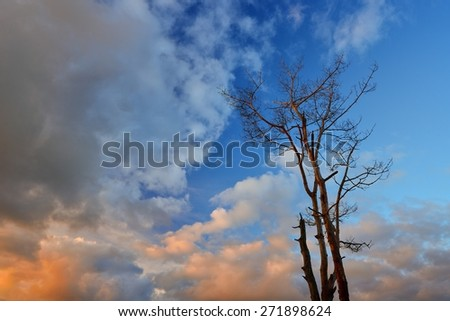 Tree against sky - stock photo