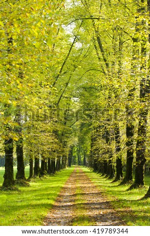 tree alley in Bavaria at spring - stock photo