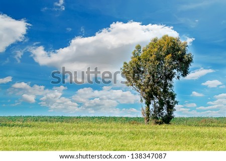 tree alone in a green field