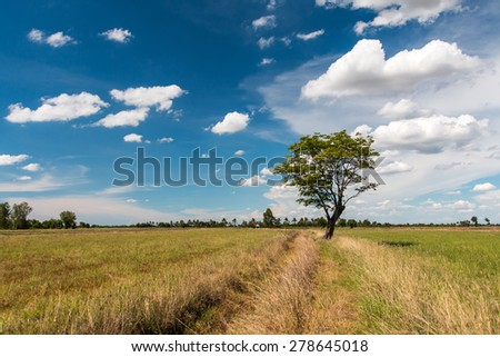 tree and a blue sky - stock photo