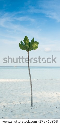 tree and beautiful seascape, Thailand
