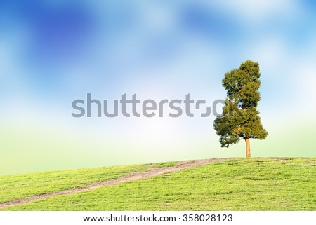 Tree and blue sky